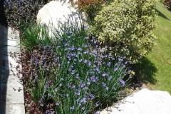 Aiuola rocciosa con piante e corteccia decorative a bordo piscina.