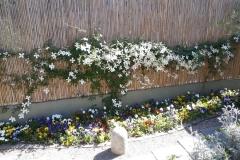 Aiuola primavera