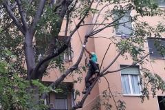tree climbing 2